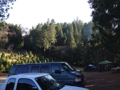 Indian Rock Tree Farm